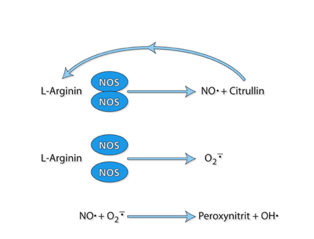 Levitra with l-arginine