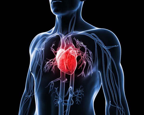 Hjärta - rödbetsjuice testas mot hjärtsvikt.