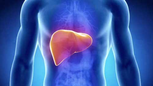 Lever - rödbetsjuice kan hjälpa till att avgifta levern.